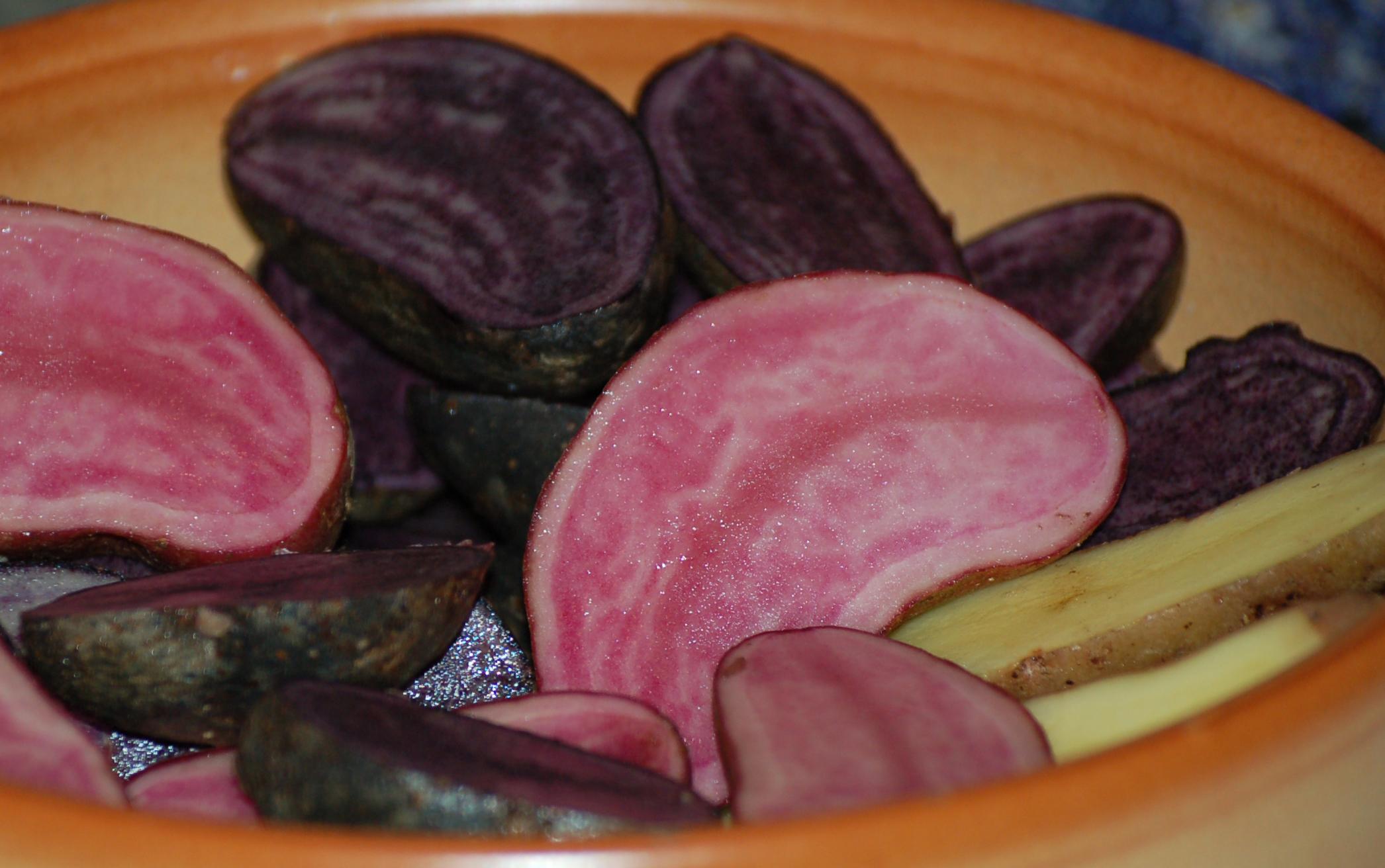 Kartoffelraritäten RoteEmma(rosa) BlaueElise RosaTannenzapfen(gelb) (6) Beschnitt web