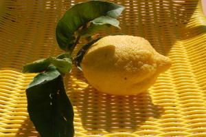 limone_di_sicilia